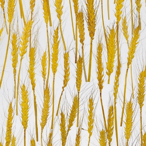SF1031 Golden Wheat SS
