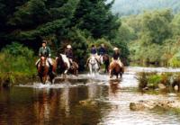 horses in river.jpg