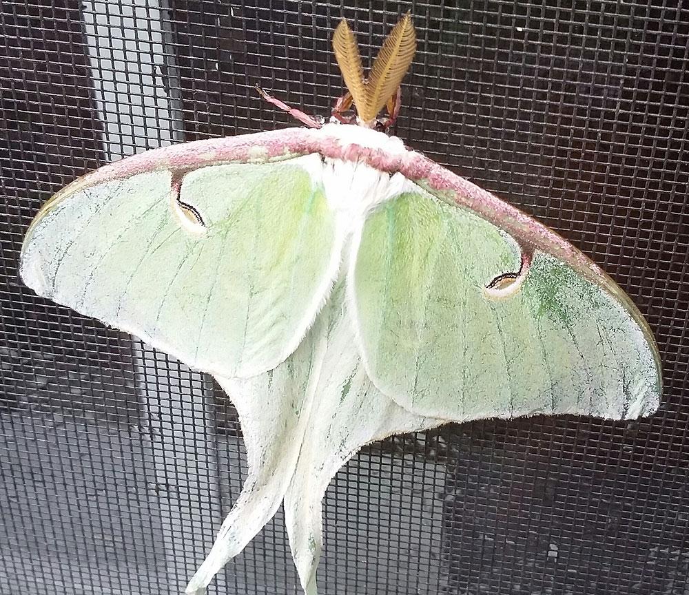 RP-moth.jpg