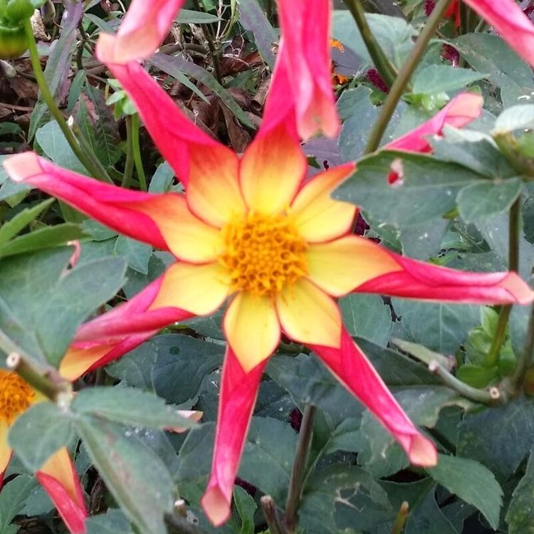 fleurs-bach-indications-fontenay-sous-bois.jpg