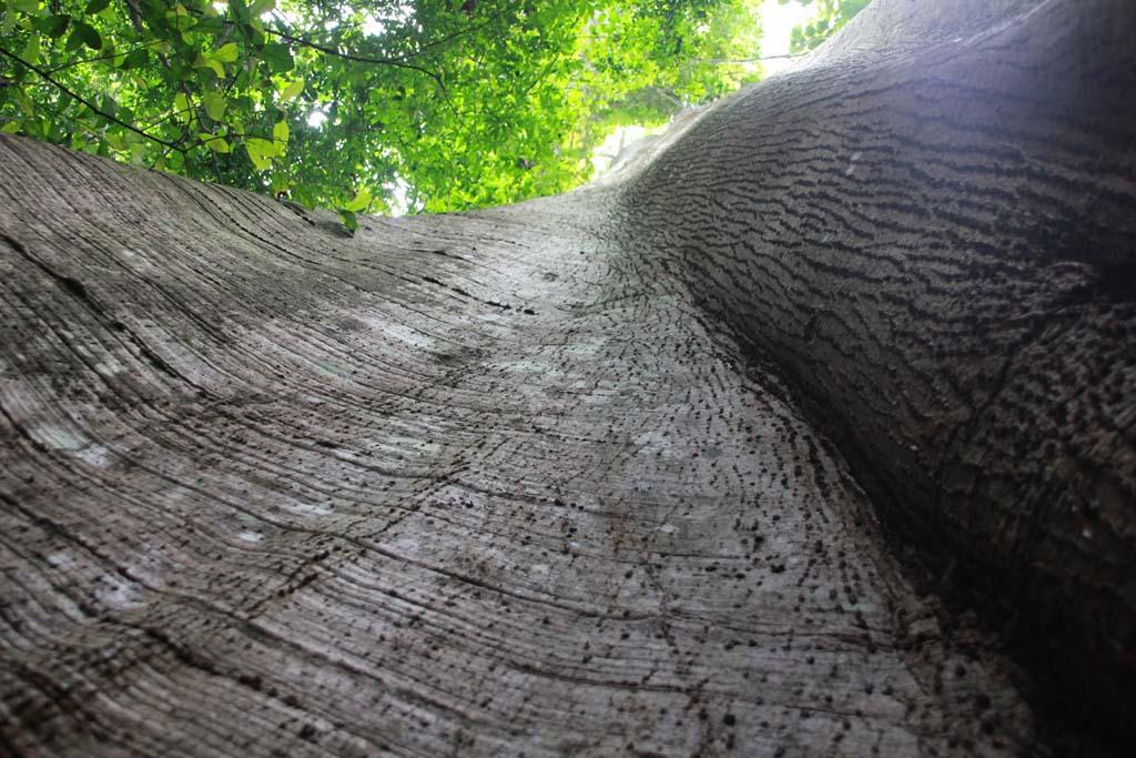 E-Forest-FORIG_22-June (11).jpg