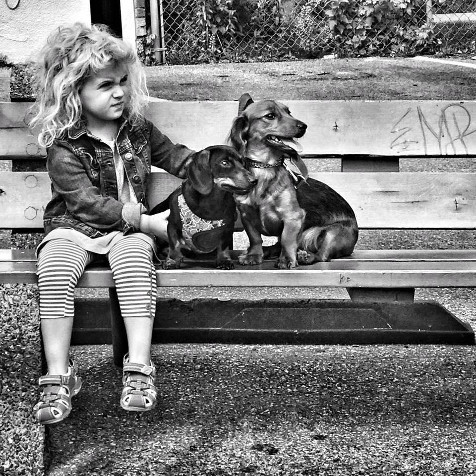 photo chien.jpg