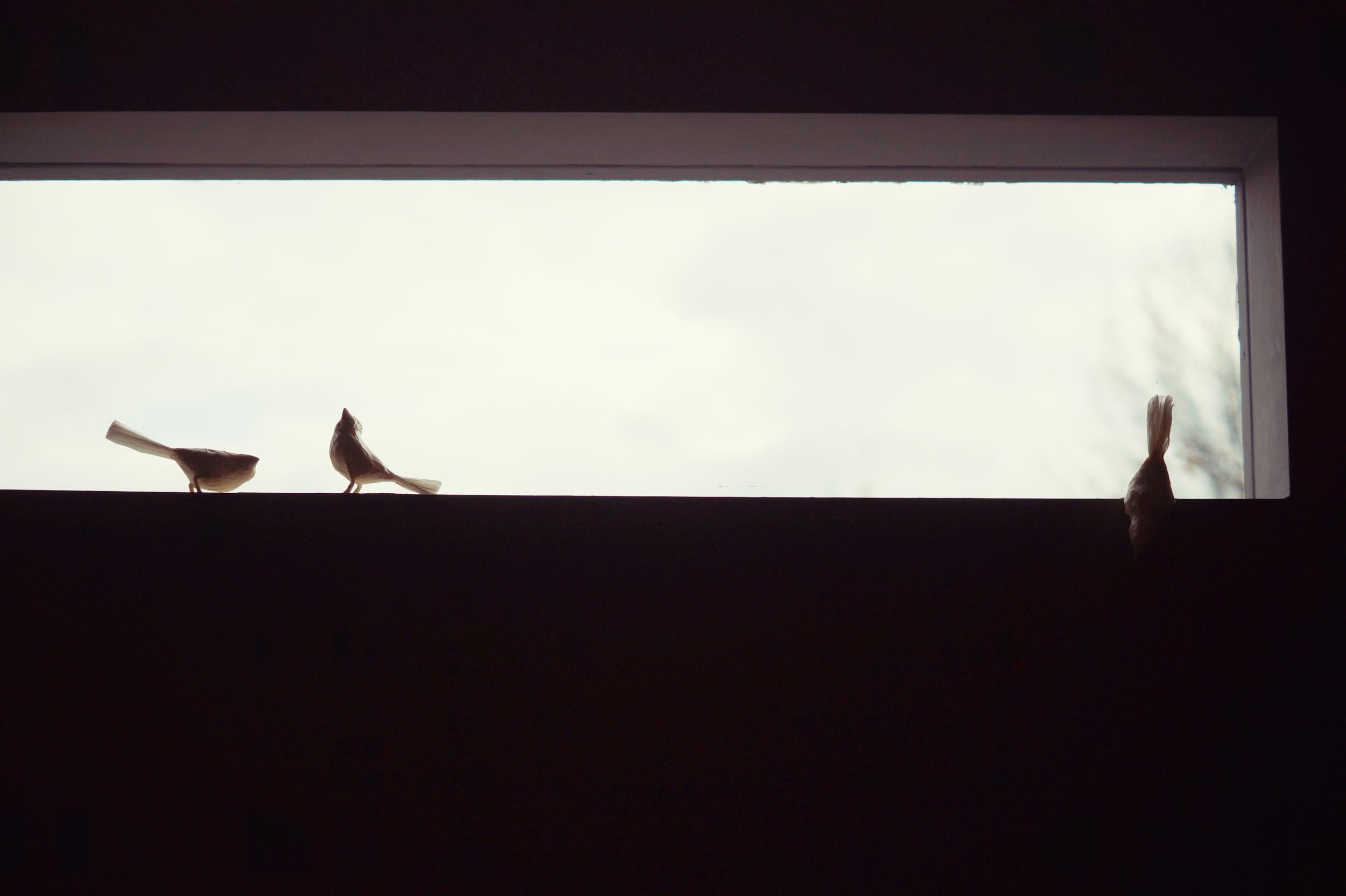 paper birds by Maxine Greer.jpg