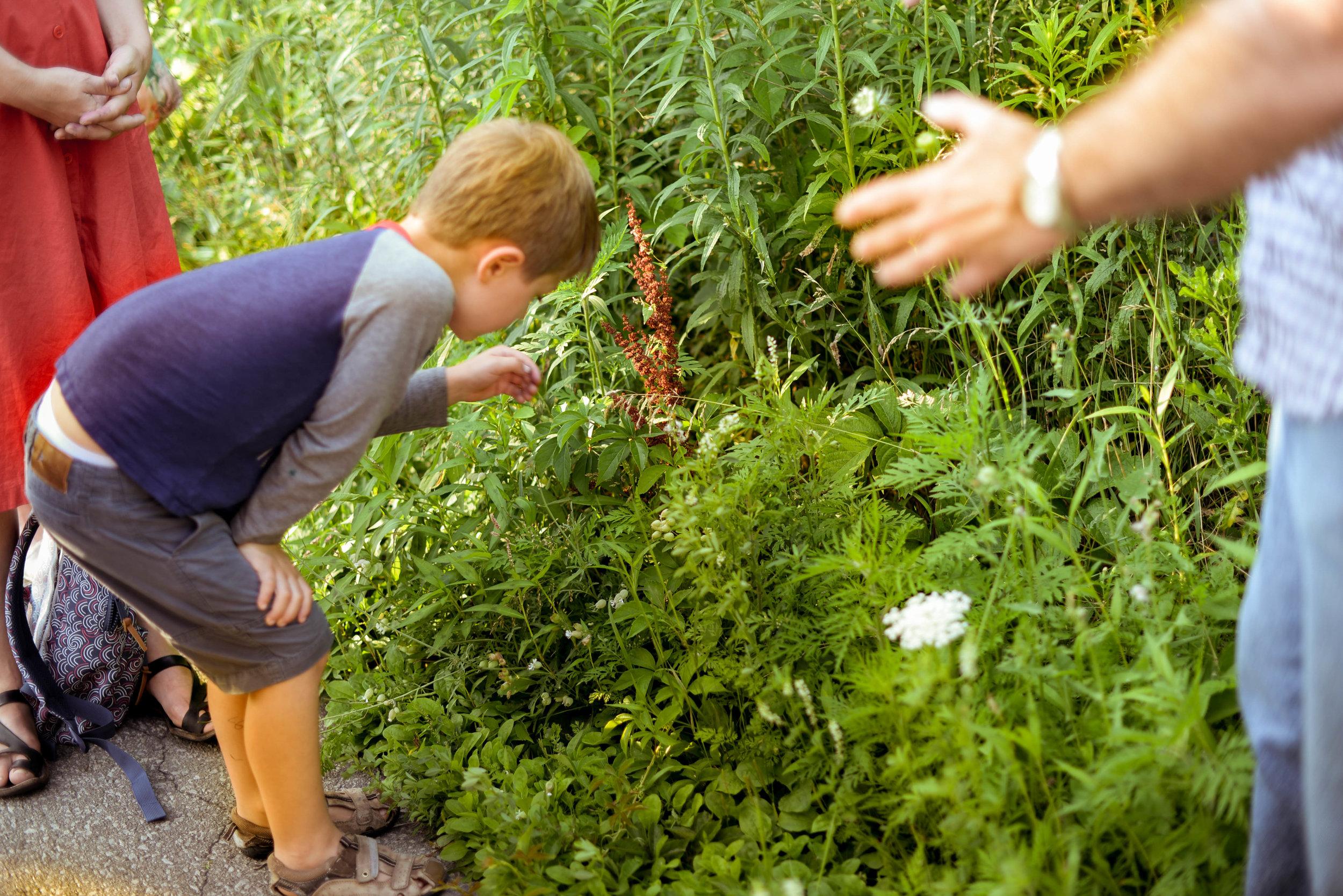 RP Plant Walk-by Pauline Nguyen 6335.jpg