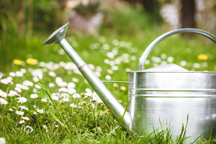 Garden watering can. Create your own garden or she shed.