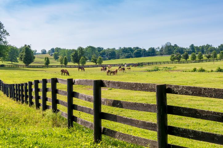 Horse Pasture - Cumberland Buildings Horse and Livestock Barns