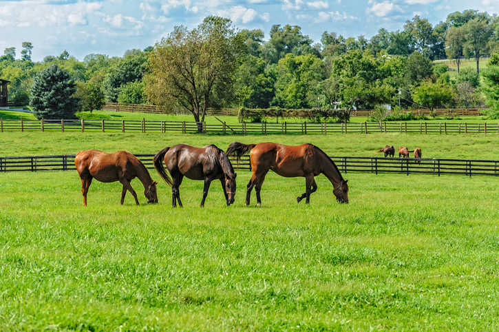 Horses in the pasture grazing - Cumberland Buildings Horse and Loafing sheds