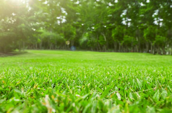 Clean cut grass