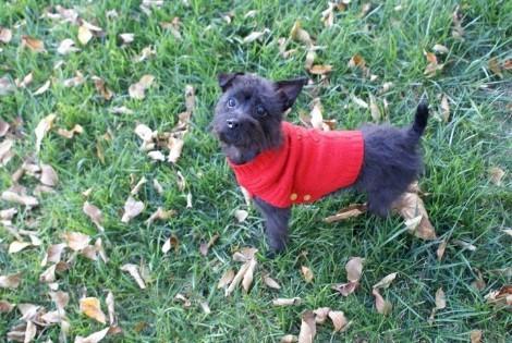 The Ferguson family dog enjoys a day at one of Lynchburg's parks!
