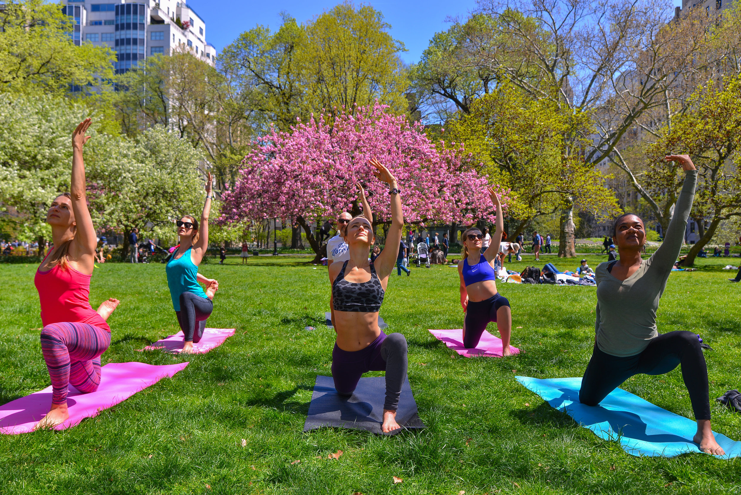 yogainthepark