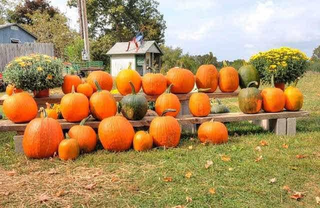 Hudson Valley Rose Hill Farm Pick Your Own Pumpkins
