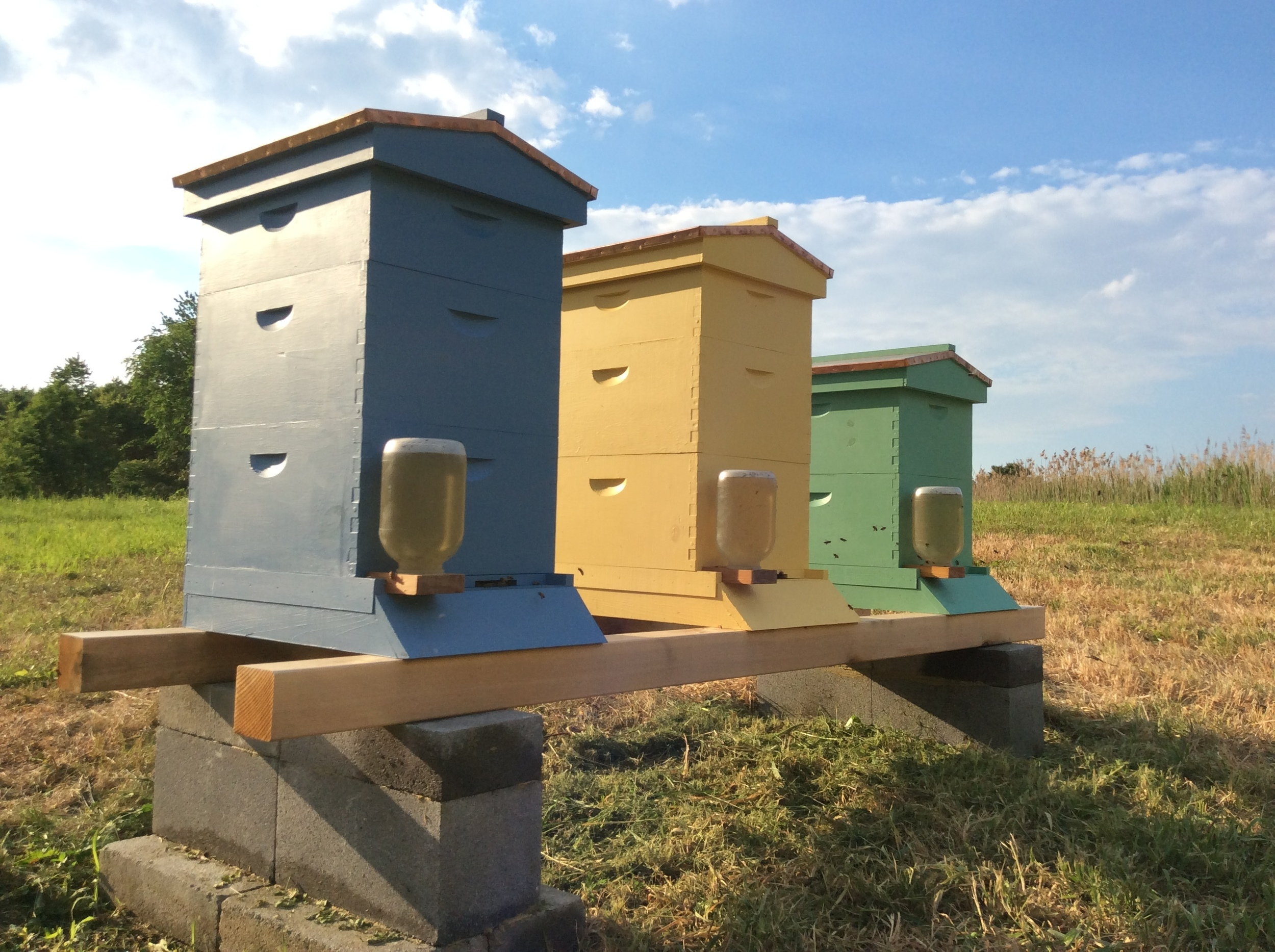 """""""Humble"""" Hive (blue), """"Hope"""" Hive (yellow) and """"Harmony"""" Hive (green), custom crafted by our resident bee keeper, Dr. Chris Belardi (""""Dr. B."""")."""