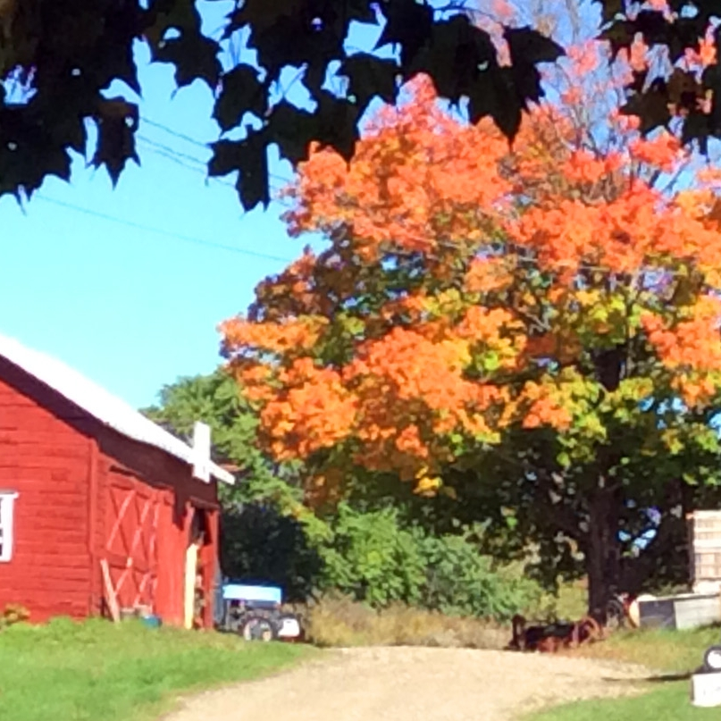 Barns Foliage Rose Hill Farm Hudson Valley Pick Your Own Apple Orchard