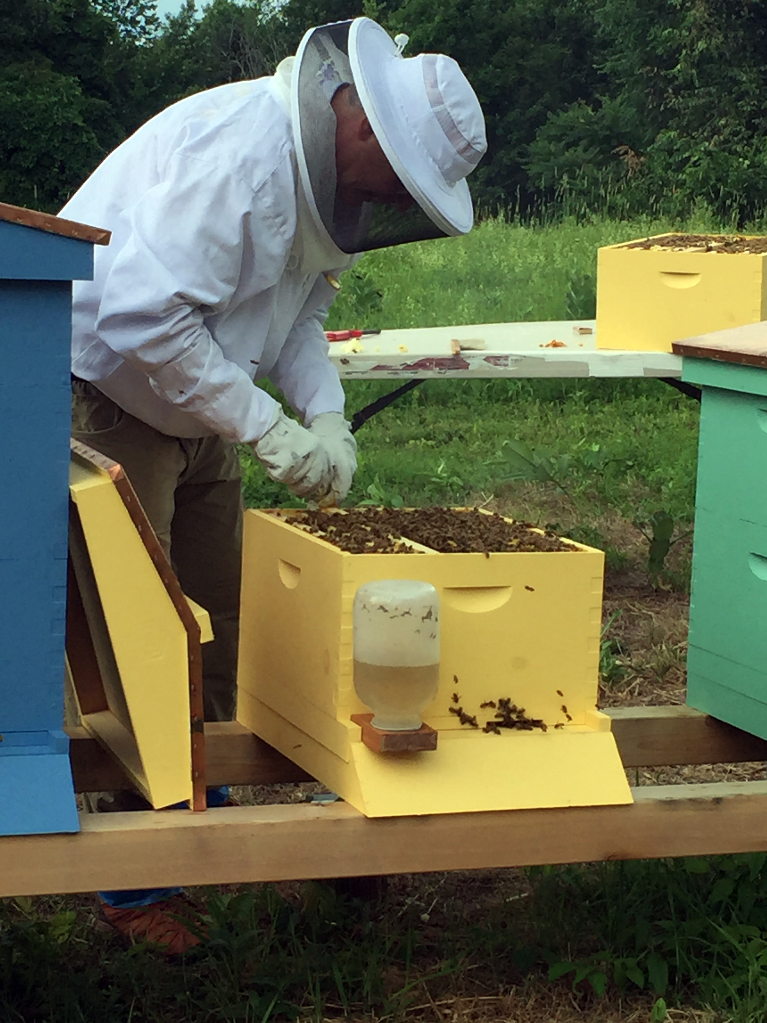 Dr B working with Humble Hope and Harmony hives