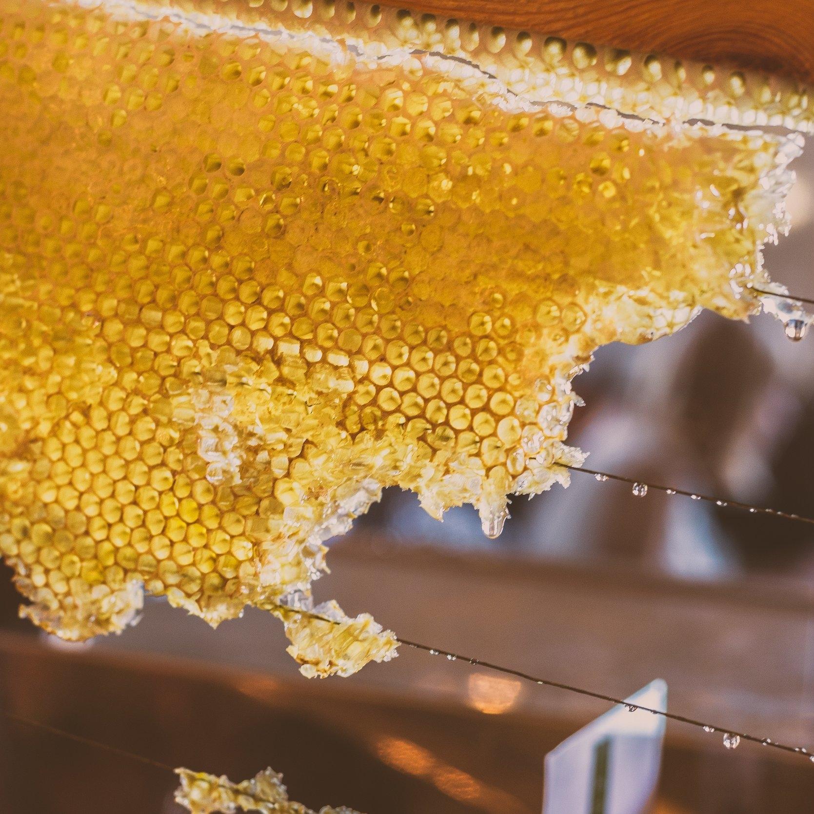 Spirit Weaver Honey.jpg