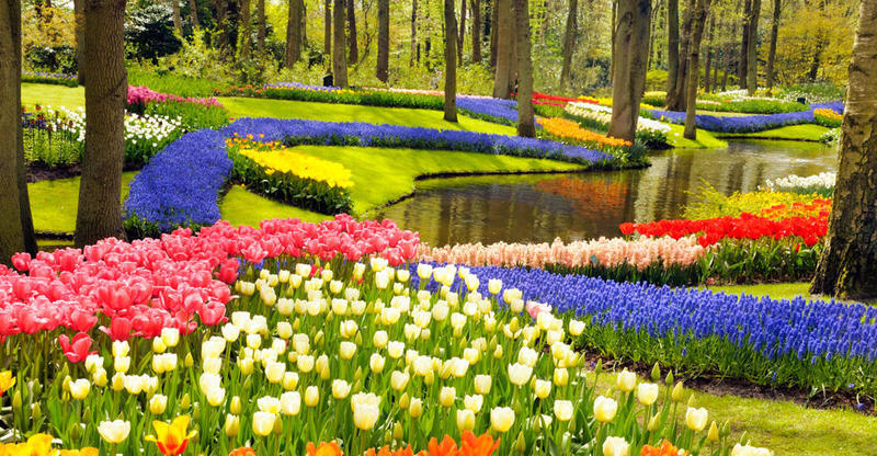 content_keukenhof-gardens-and-tulip-fields-tour-from-amsterdam-281975-raw.jpg
