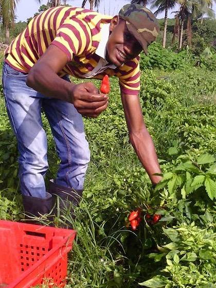 l'Incubation Agropreneur