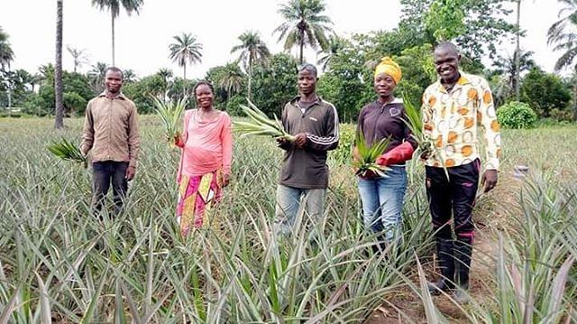 #DaretoInnovate #OsezInnover #Guinee #Agriculture #Agribusiness  DONNER ET RECEVOIR : PROMOUVOIR UNE PRODUCTION D'ANANAS DE QUALITE POUR L'EXPORT, TELLE EST LA MISSION QUE S'ASSIGNENT BARRE MILLIMOUNO ET ASSOCIES ! Cette mission, résulte de leur volonté de prendre leur destin en main au sein d'une entreprise gérée démocratiquement et où la propriété est collective entre des Ingénieurs Agronomes, Vétérinaires et Techniciens Supérieurs en Agriculture.  Voilà une monographie utile. Le récit donne un très bon condensé de la complexité des enjeux qui se posent à l'agriculture guinéenne et des efforts consentis par des jeunes citoyens pour trouver, par la coopération, des réponses aux défis auxquels ils sont confrontés au quotidien dans un pays où Dame Nature a presque tout donné.  Le cas Barrè MILLIMONO, Elisabeth Finda LENO, Aboubacar SYLLA, Odette Koumba LENO et Ibrahima Sory SYLLA,  à bien des égards, est une  véritable révélation qui dévoile tout un pan du monde rural et agricole guinéen. Ce cas montre aussi une histoire de jeunes gens impliqués dans leur milieu et dans un cadre qui favorise la démocratie et la solidarité. Un bel exemple de développement de l'esprit juvénile en Guinée.  Depuis leur première rencontre en 2018 à Faranah, ces jeunes ont scellé le pacte de ne plus se quitter et de réussir ensemble. Ceci à l'occasion de la formation de la première cohorte du programme AVENIR (Apprentissage en Vulgarisation, Entrepreneuriat et Innovation Rurale) par notre équipe de business coach, un programme mis en œuvre par le projet SAVY, SMART et Winrock international financé par USAID.  Pour cette première année de production, l'équipé Barré compte réalisée  un chiffre d'affaire estimé à 152 millions de francs guinéens sur ½ hectares et dans  deux (2) à trois (3) ans passé  à  cinq 5 hectares de terre cultivable. Nous espérons qu'ils seront capable de surmonter toutes les montagnes qui se présentent devant eux et de garder toujours à l'esprit que la volonté de réussi