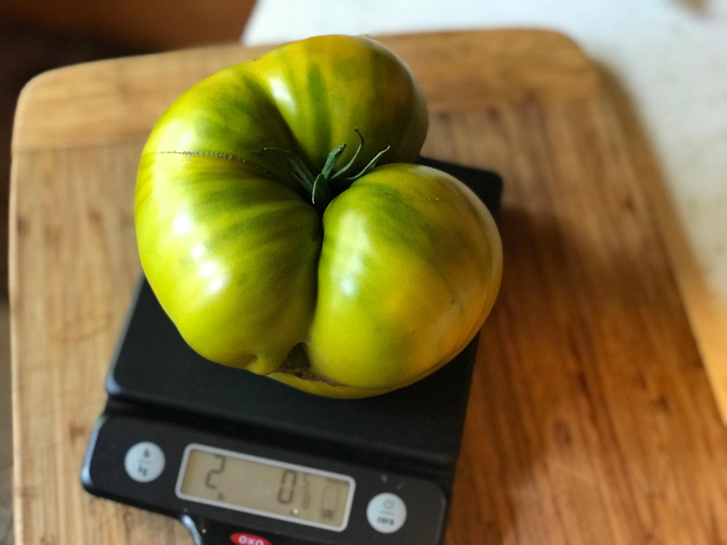 David's  Cherokee Green tomato.