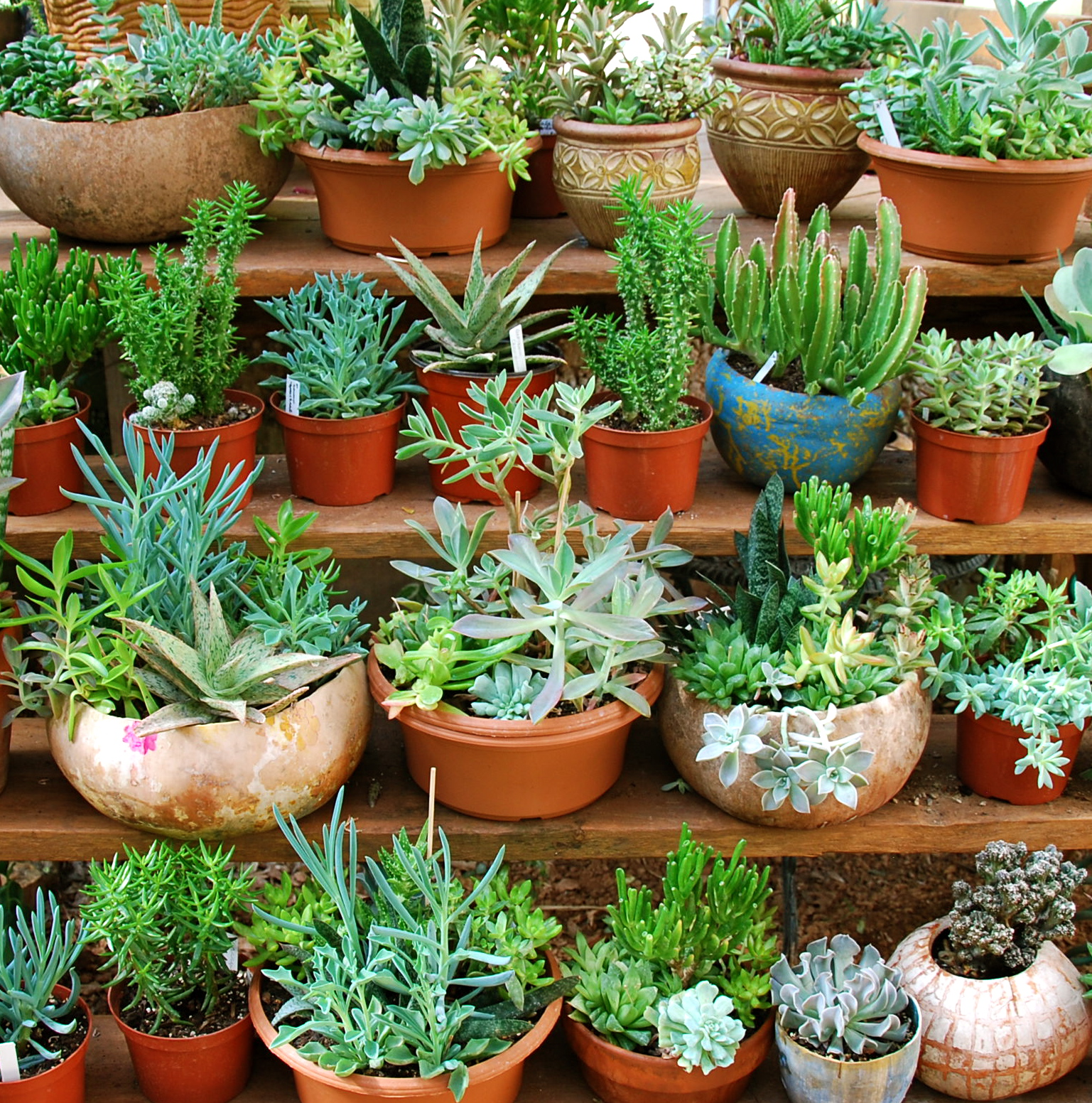 Arrangements in containers