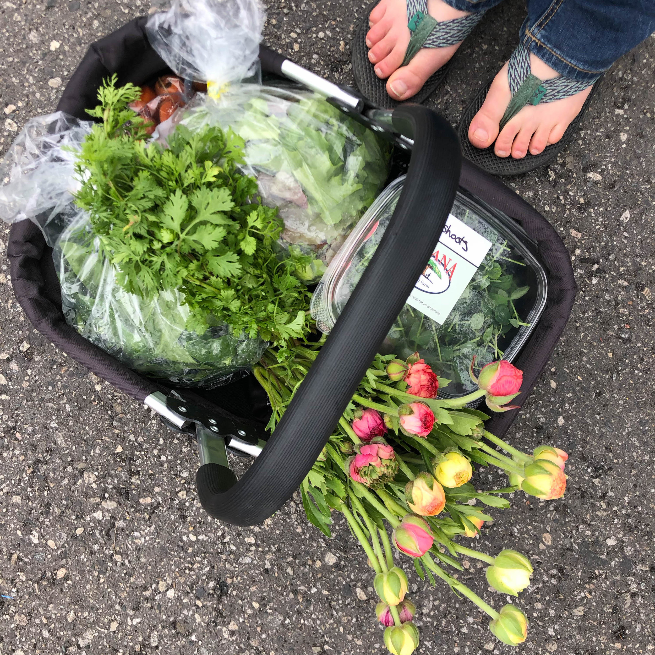 4.14.18 Market 2 - Salad Mix, Spinach, Ranunculus Fiddler's Green Farm. Pea Shoots Ohana No Till Farm. Over-Wintered Carrots Holy Green Gardens. Cilantro Purple Sage Farms. Steak Triangle C Beef Ranch. Bone in Chicken Breast Matthews Family Farm.