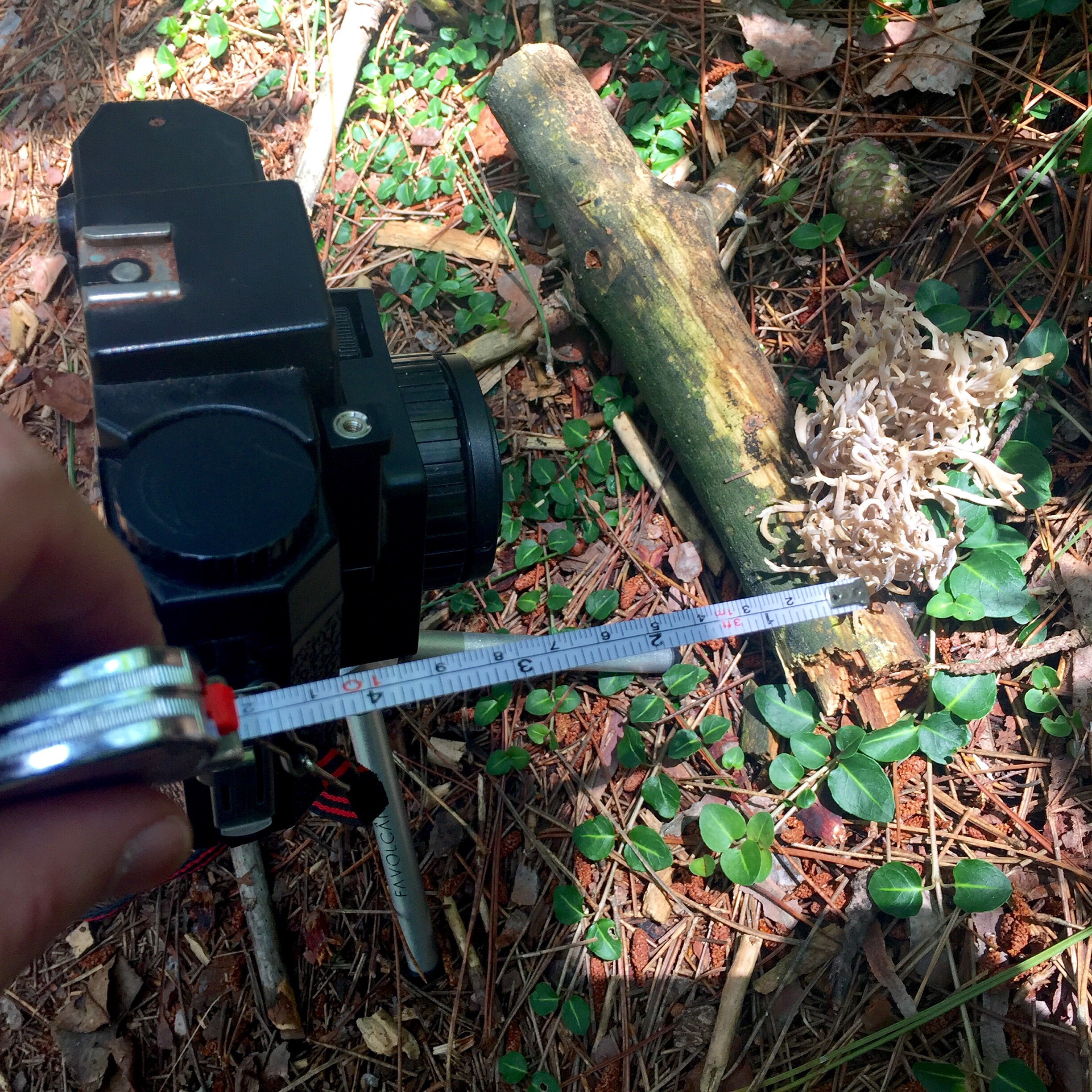 """Setting up the shots above with a 120mm lens on the Holga - measuring 4.7"""" from the subject."""