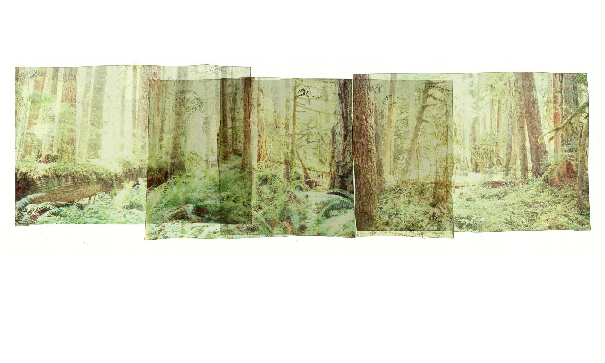 _0008_The-American-Rainforest.jpg