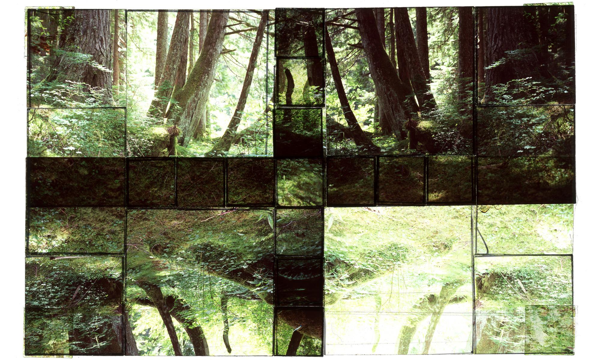 Rainier Rainforest #3.jpg