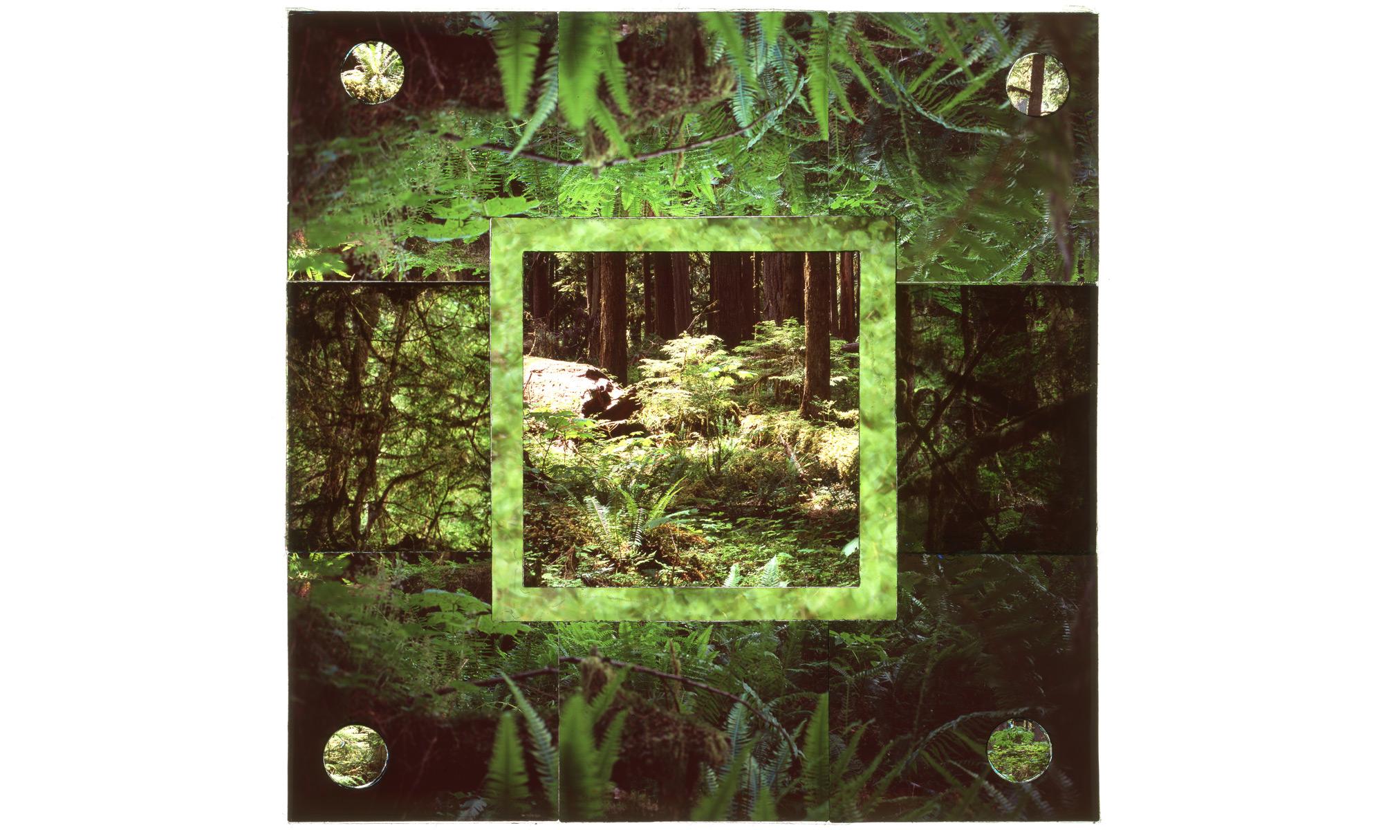 Rainier Rainforest #4.jpg