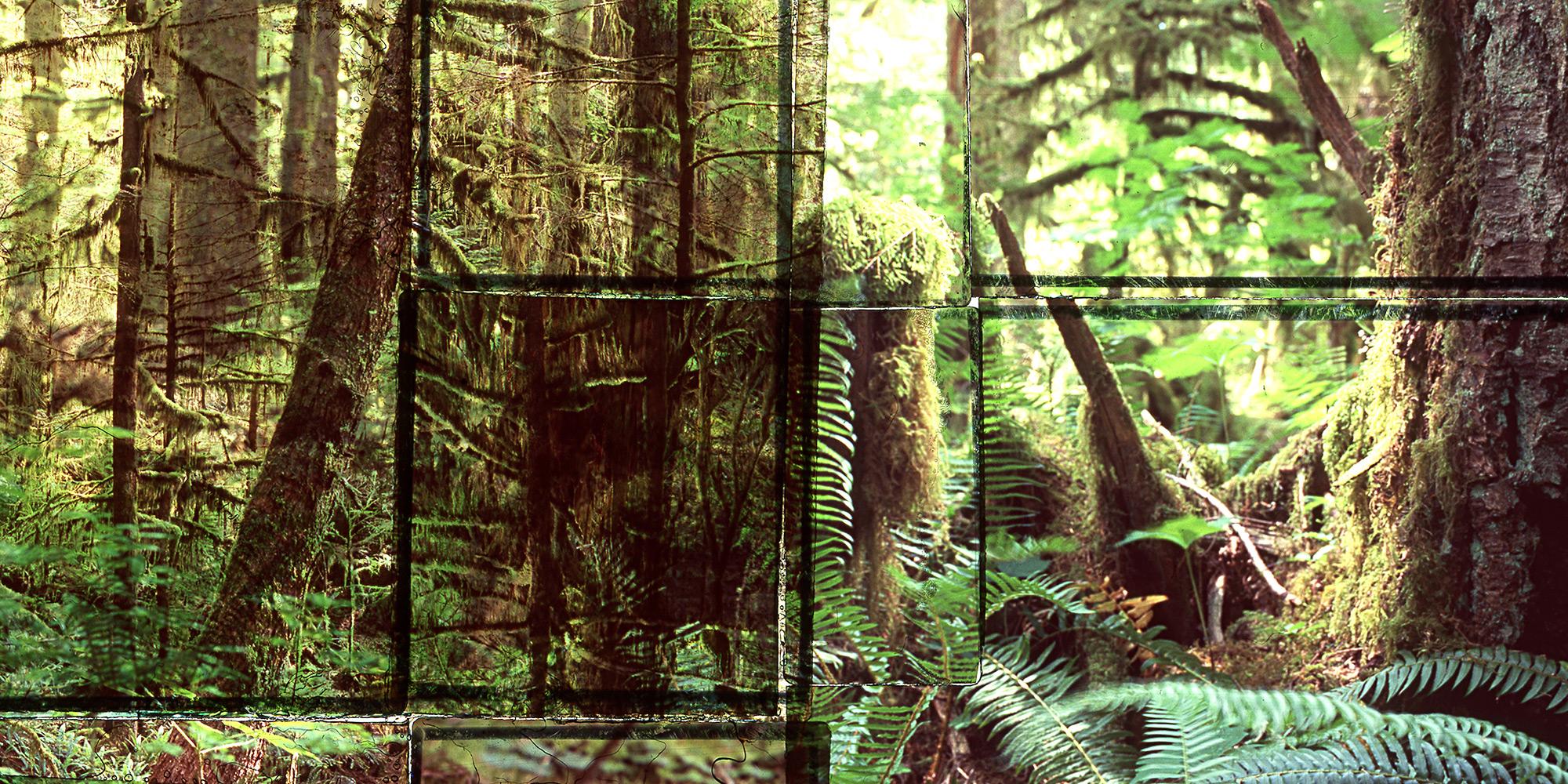 Website-Photos-April-2018_0002_Rainforest-2-detail.jpg