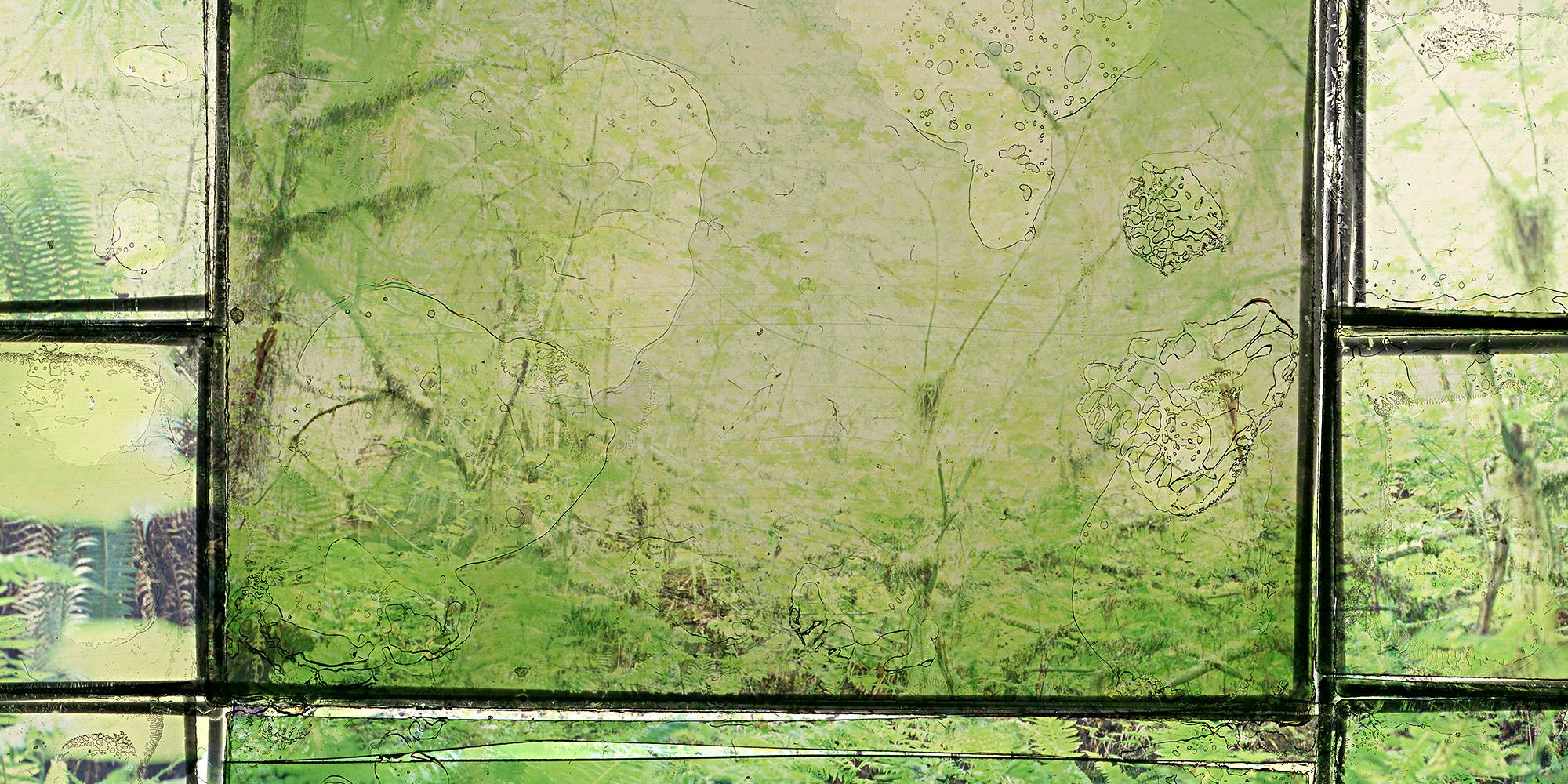 Website-Photos-April-2018_0003_Rainforest-1-detail-.jpg