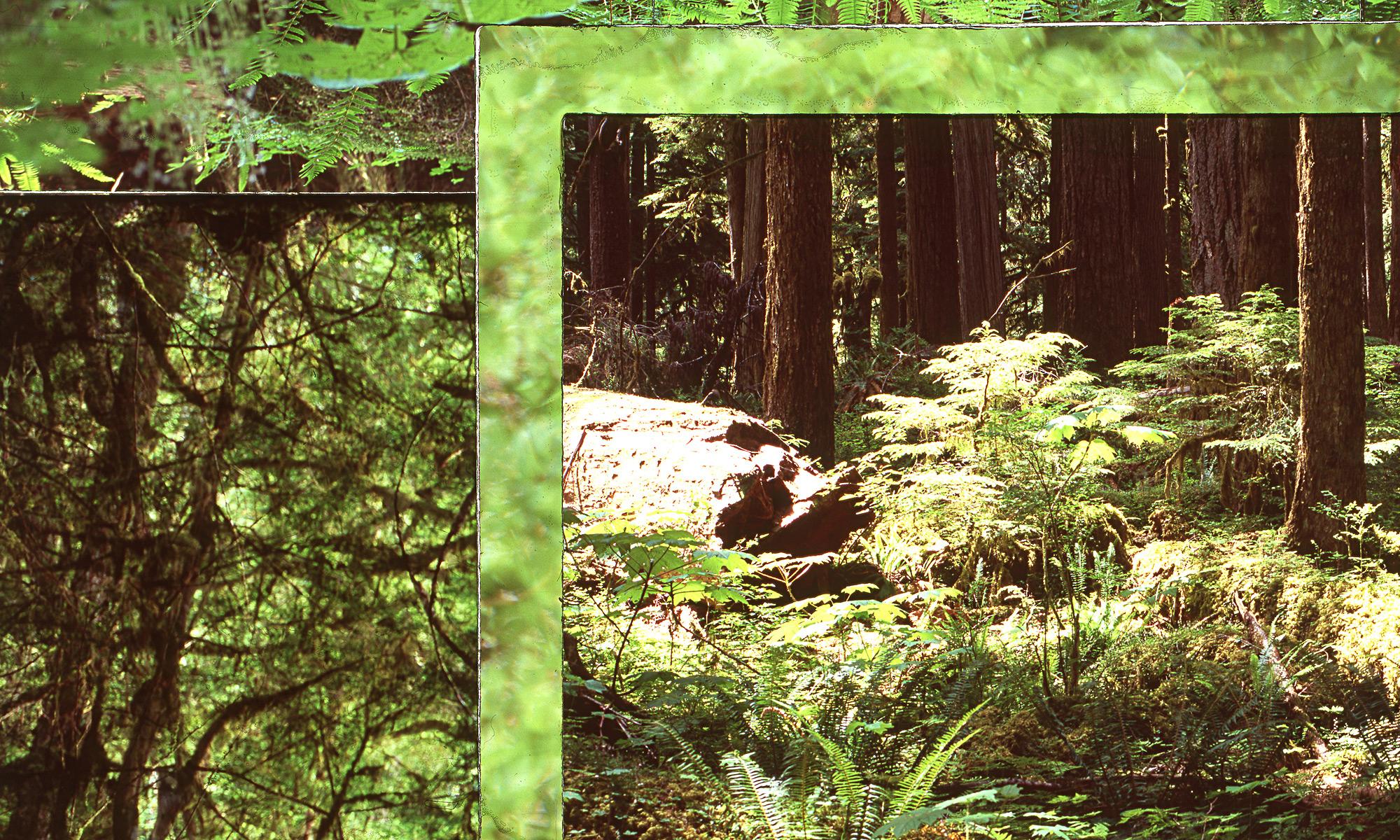 Website-photos-larger-April-2018_0002_Rainforest-4-detail.jpg