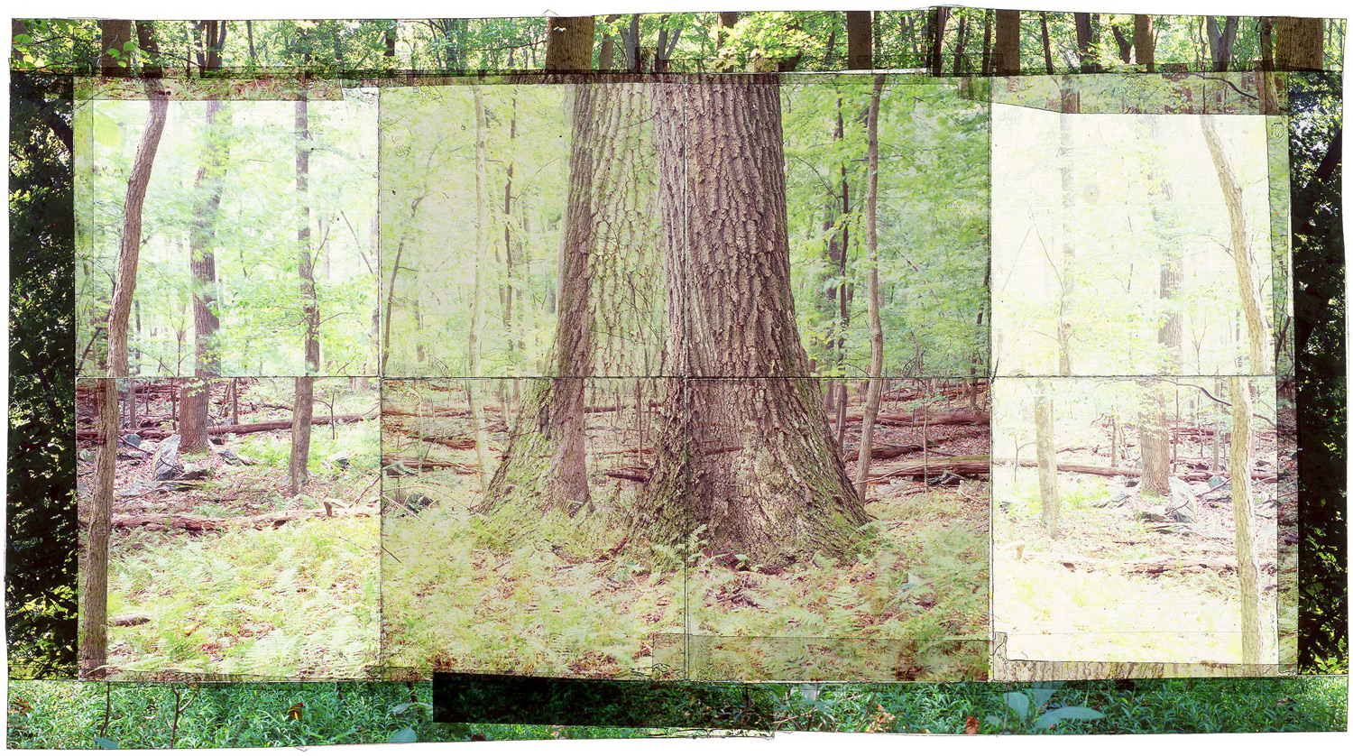 """GAMBRILL SP, 3   • 30""""x 17"""" • GICLEE PRINT FROM TRANSPARENCY FILM COMPOSITION"""