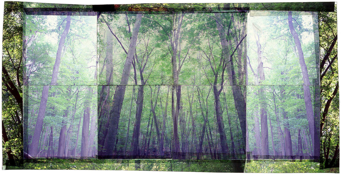"""GAMBRILL SP, 2   • 30""""x 17"""" • GICLEE PRINT FROM TRANSPARENCY FILM COMPOSITION"""