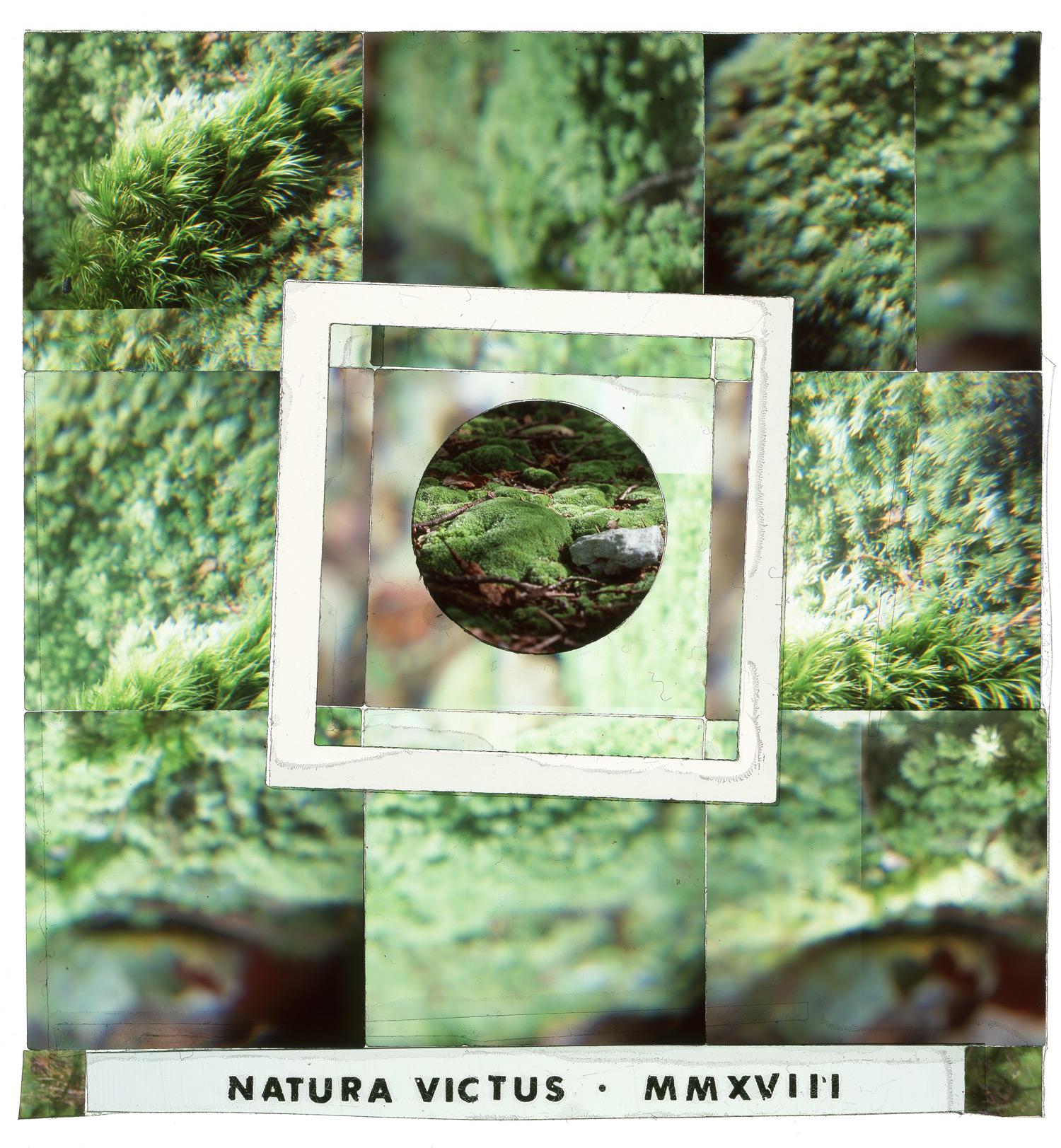 "Natura Vitus #1, 24""x26"""