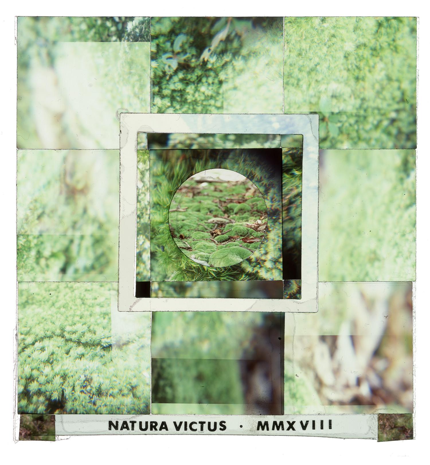 "Natura Vitus #2, 24""x26"""
