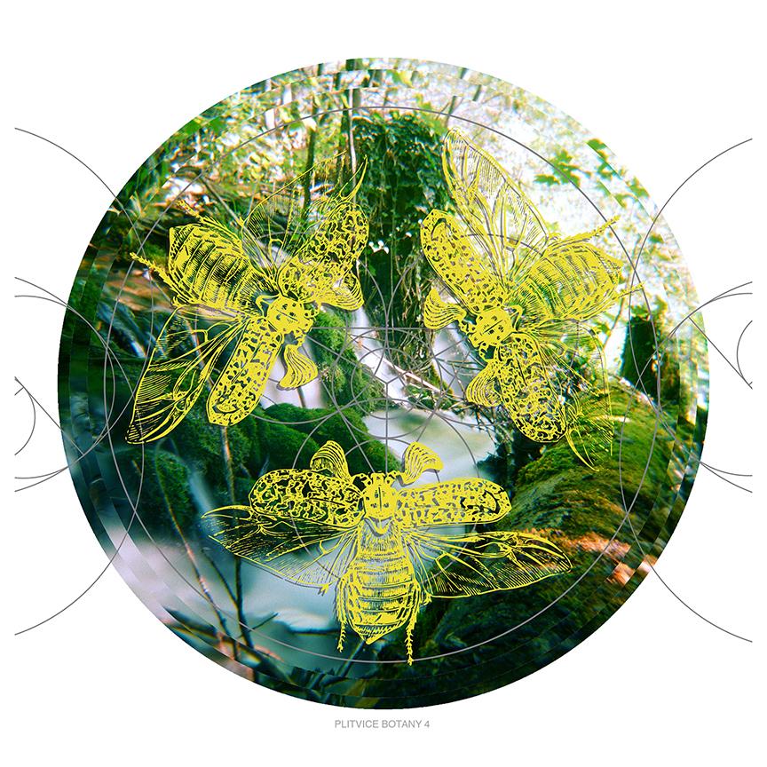 Plitvice Botany 4 postcard web.jpg