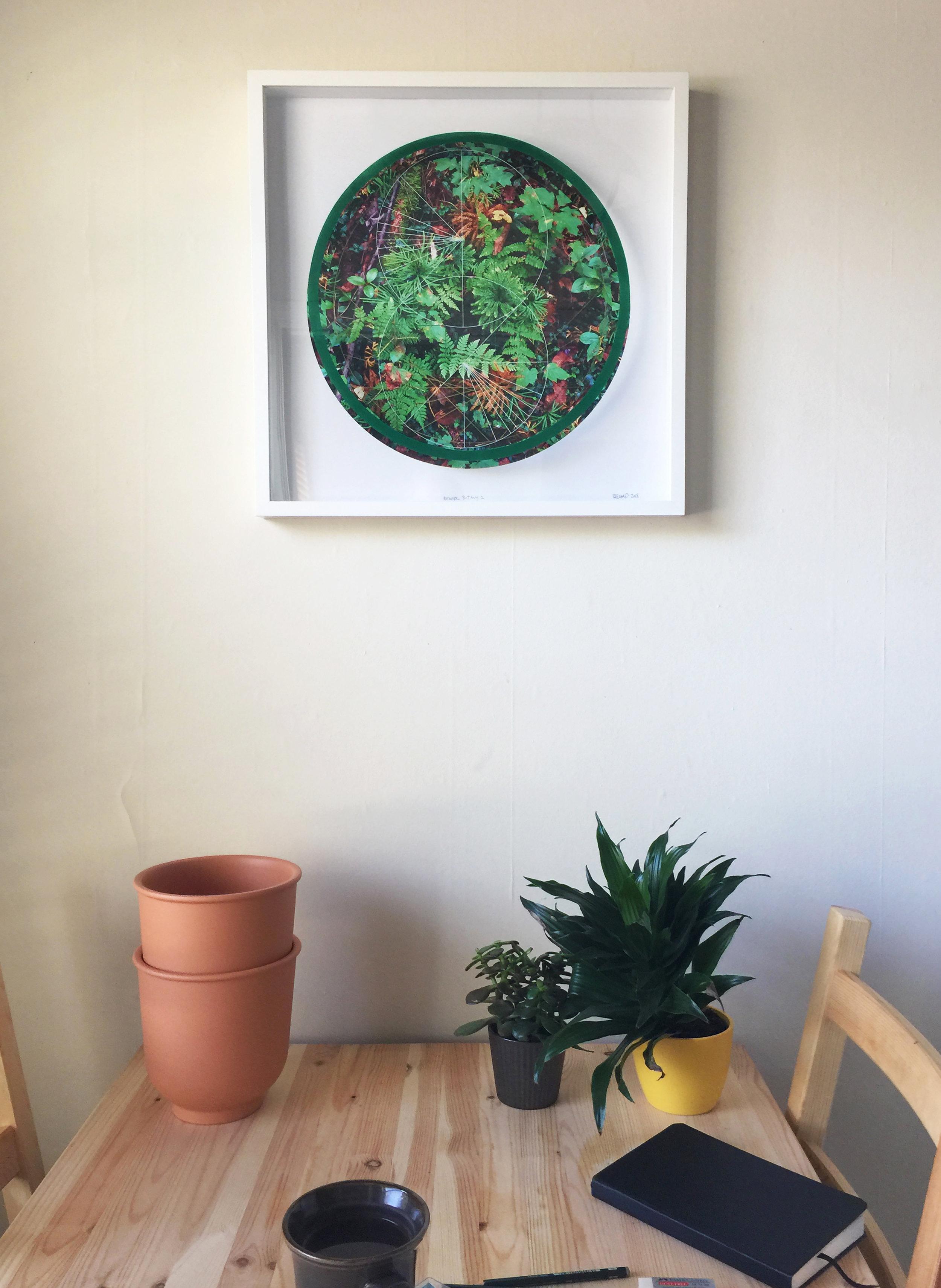 Rainier Botany 1 on wall.jpg
