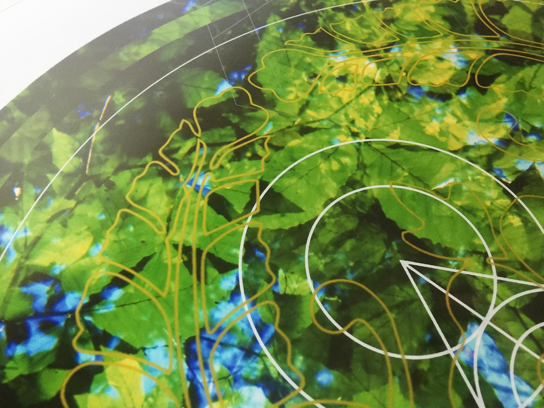 Rainier-Botany-2-detail-table.jpg