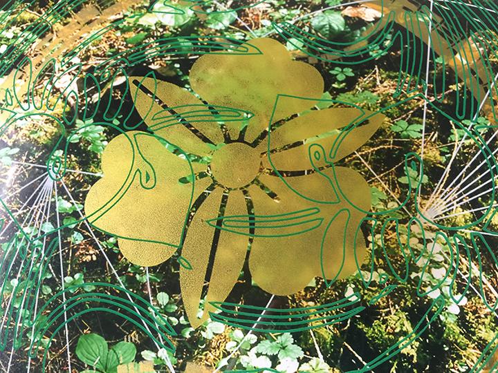 Rainier Botany new 5 7.jpg