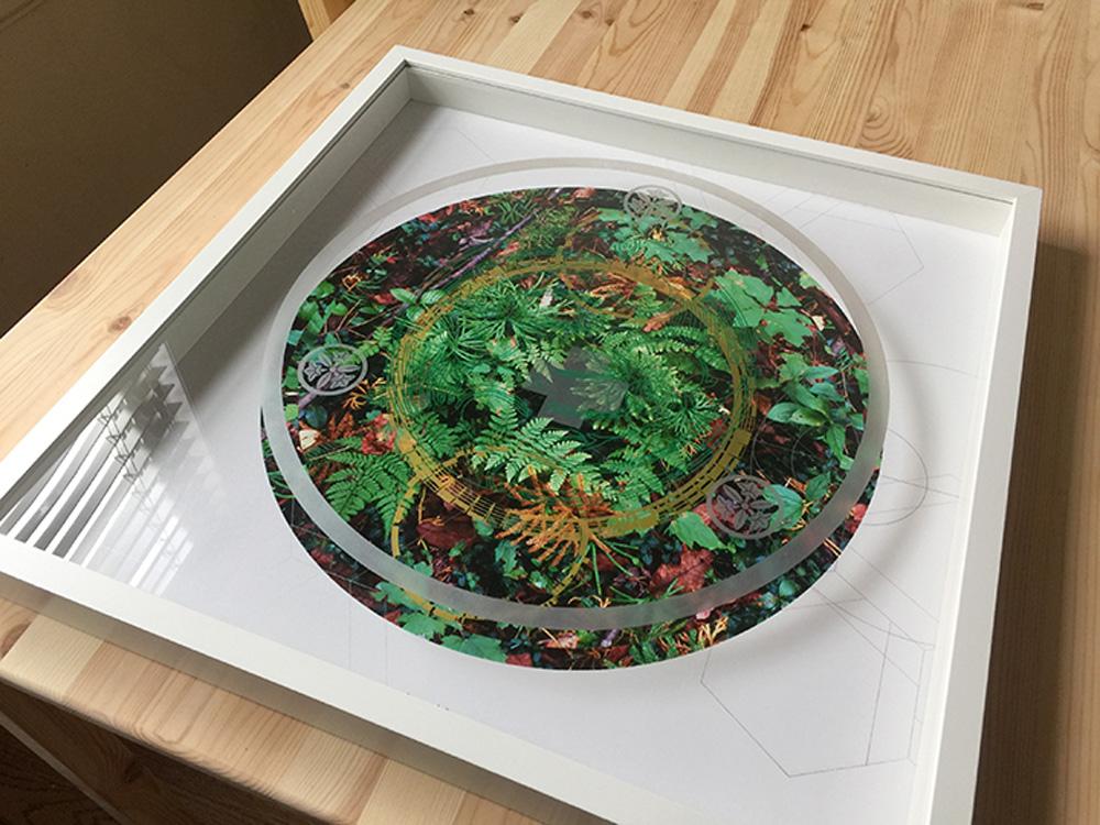 Rainier-Botany-new-8-3.jpg
