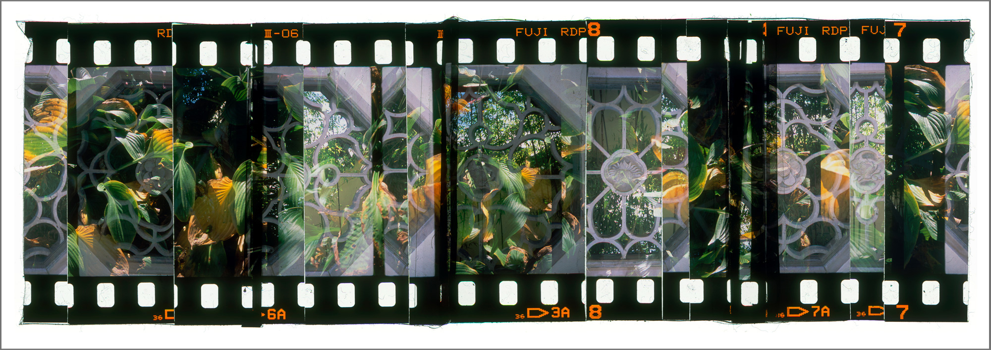 """ARBORETUM GARDEN 1,   ACRYLIC MOUNTED PRINT FROM 35MM TRANSPARENCY FILM COMPOSITION, 17"""" x 48"""", EDITION OF 5"""