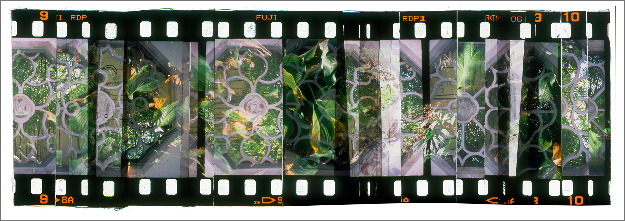 """ARBORETUM GARDEN 2,   ACRYLIC MOUNTED PRINT FROM 35MM TRANSPARENCY FILM COMPOSITION, 17"""" x 48"""", EDITION OF 5"""
