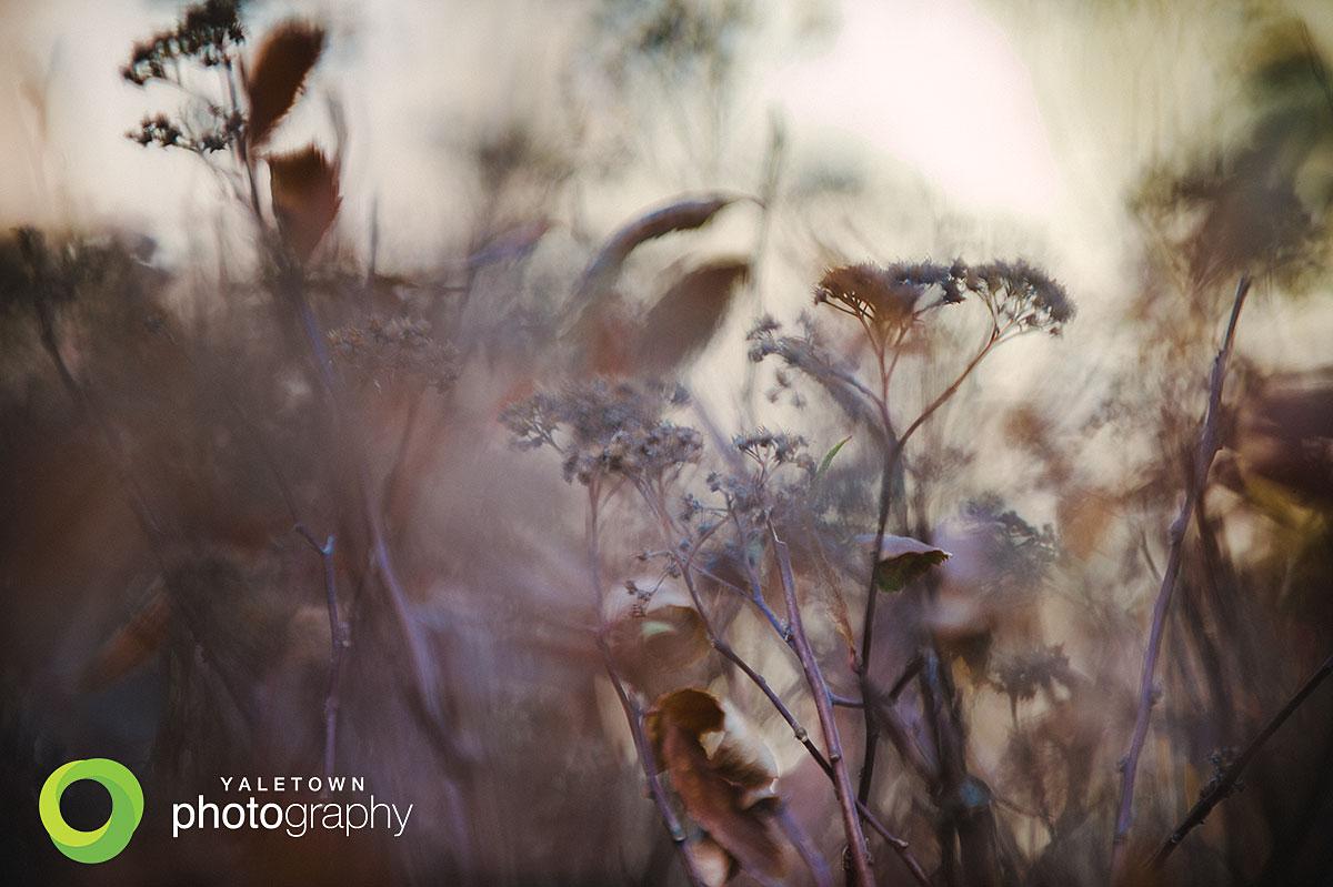 Hiver_Yaletown_Photography_Winter_Photo.jpg