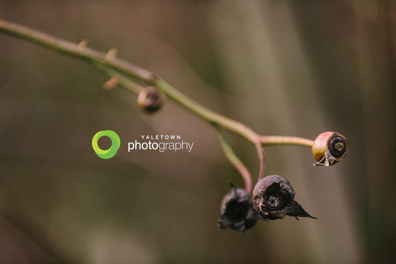 Blueberry_Winter_Photos_Yaletown_Photography.jpg