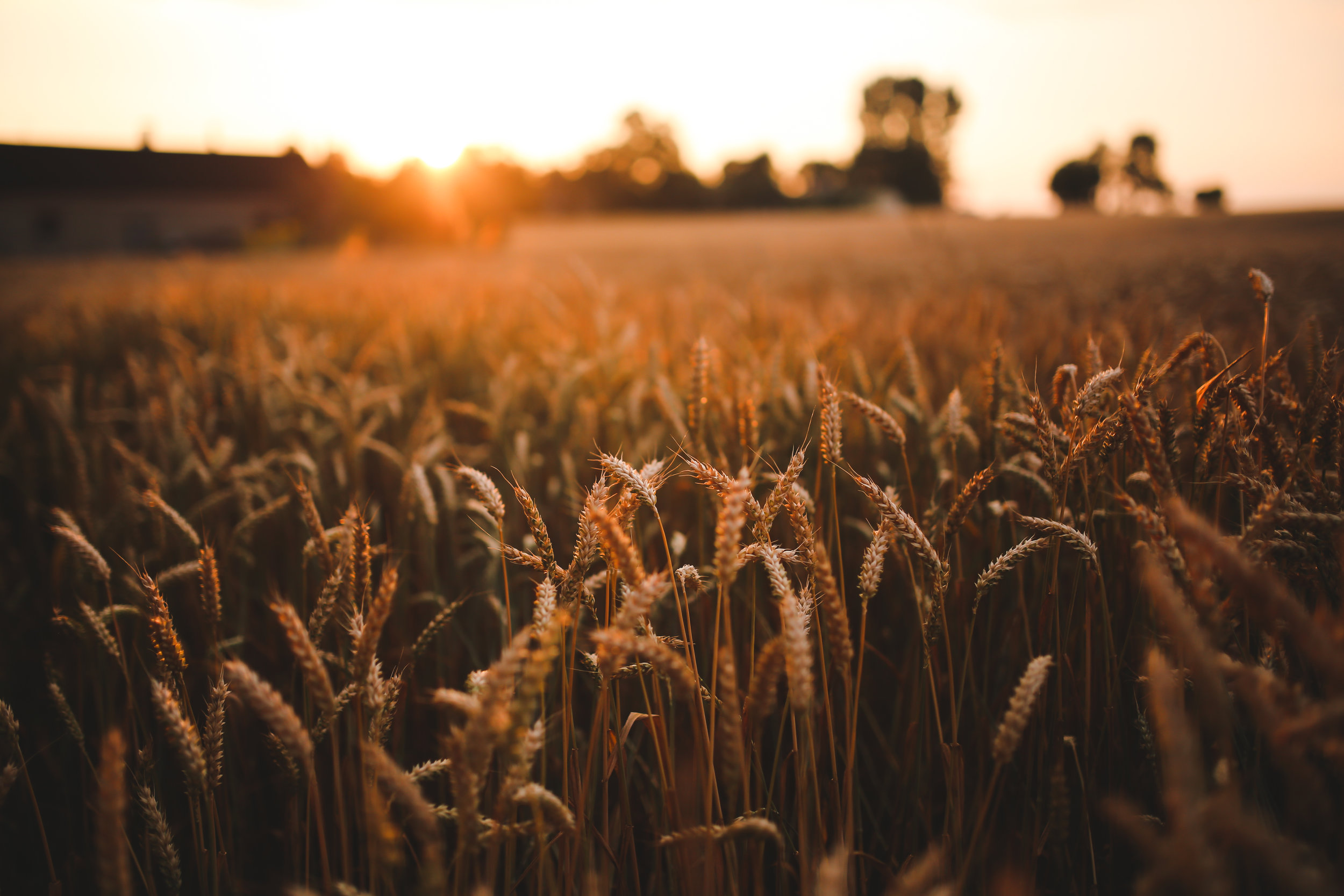 grains and cereals