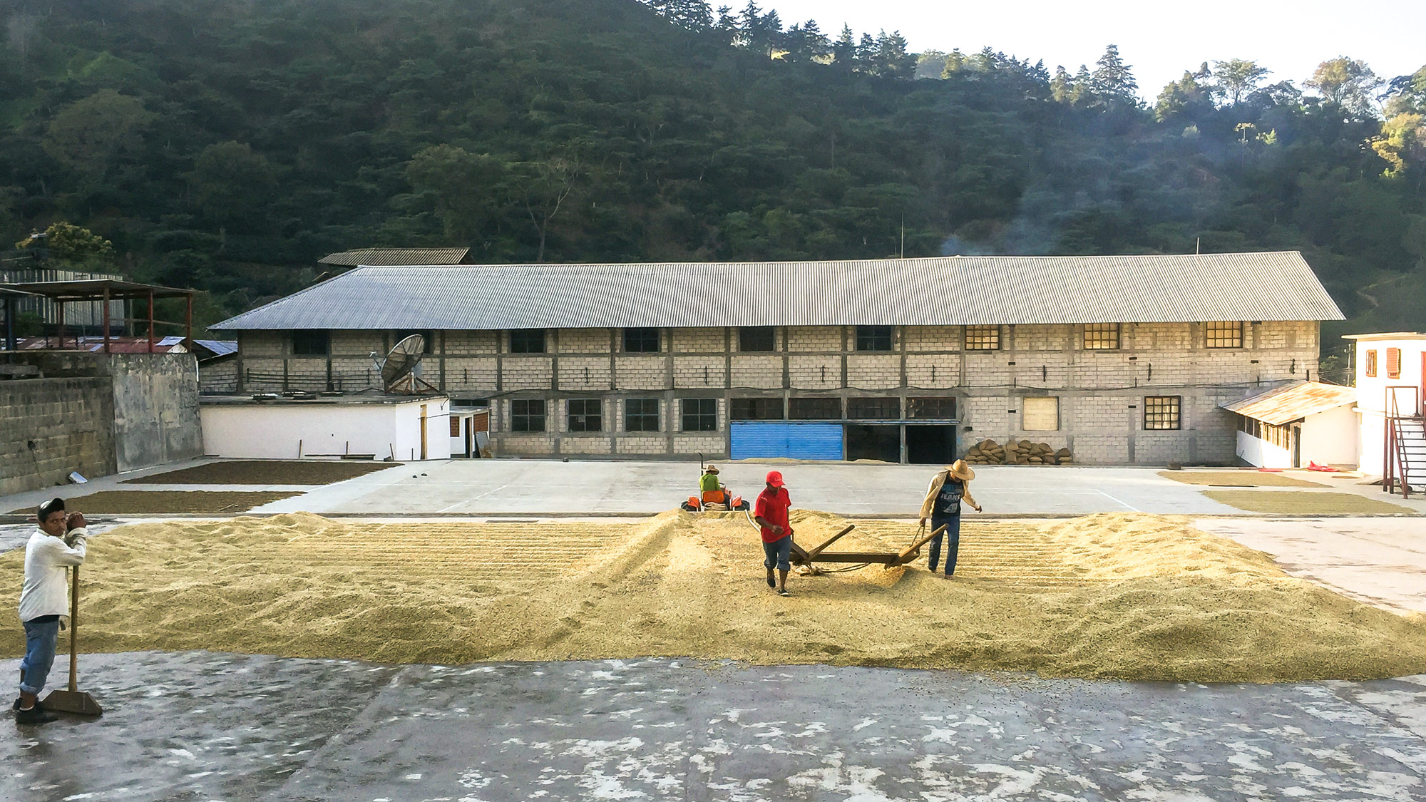 Workers at Finca Custapec in Chiapas, Mexico prep recently harvested beans for drying. Custapec is a fourth-generation-owned farm (the Pohlenz Family) that provides healthcare and schooling for permanent workers' families.