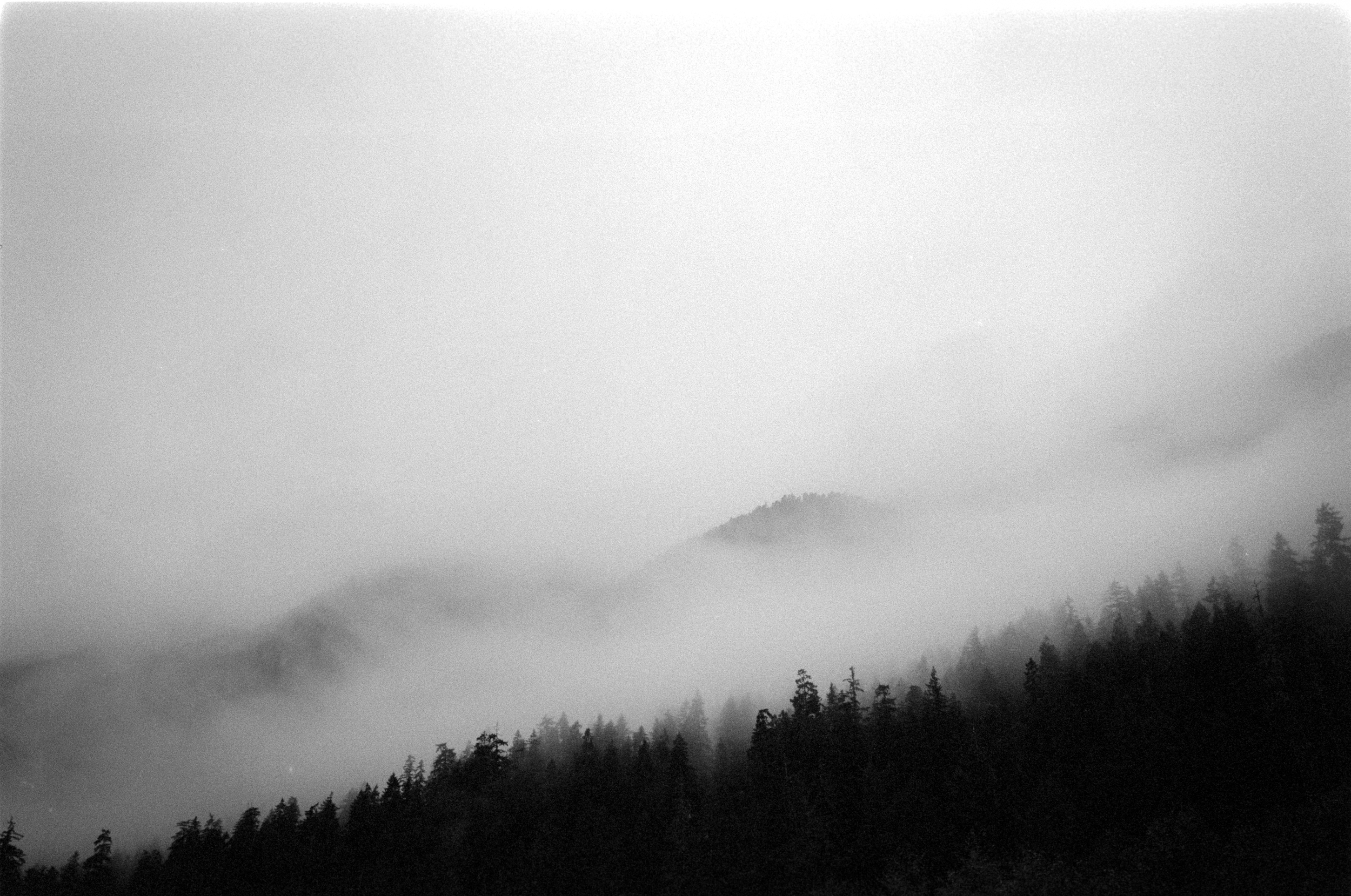 Fog rolling into the river valley.  Hoh River, WA.