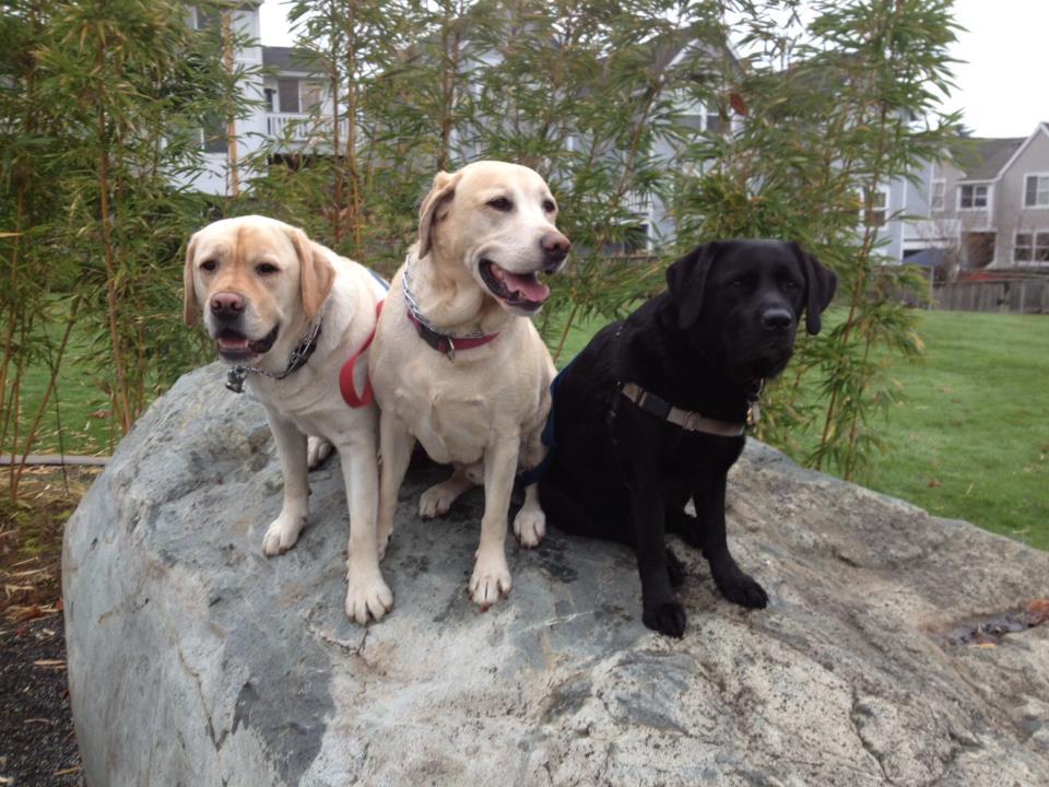 putnam boys on a rock.jpg