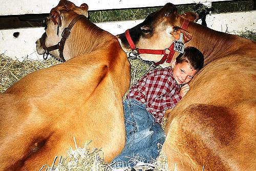 cows_Rachel Kelso.jpg